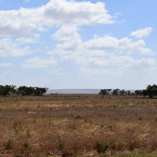 Outback zwischen Adelaide und Port Augusta