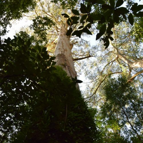 Great Otway National Park 1