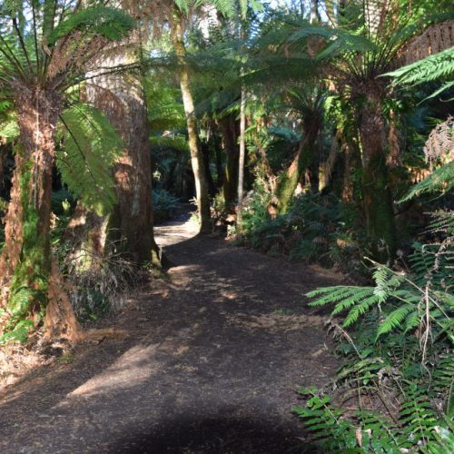 Great Otway National Park 2